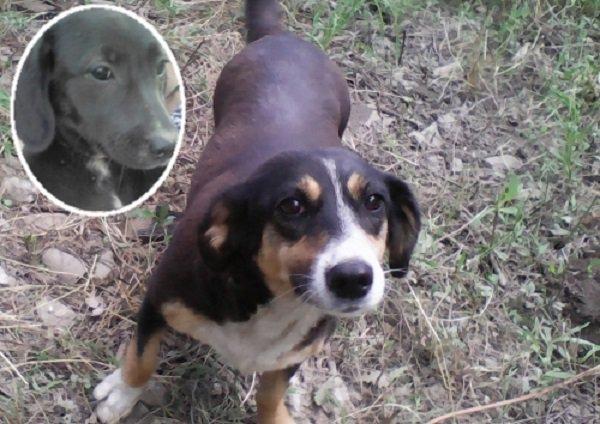 В Камышине Волгоградской области полиция устанавливает личности живодеров, которые выкололи щенкам глаза и отрезали языки.