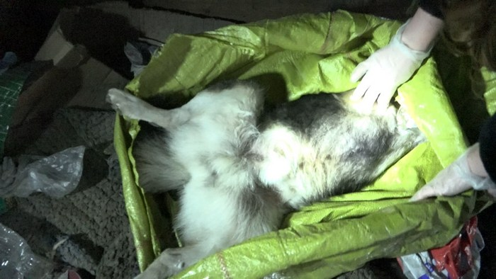 Догхантер отстреливает и давит машиной домашних собак ссылаясь на заказ МУП «Чистый город»
