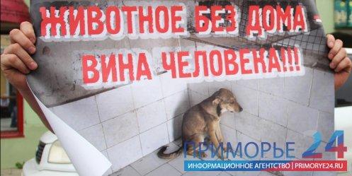 Волонтёры фонда «Найда» провели пикет, направленный на популяризацию стерилизации домашних животных