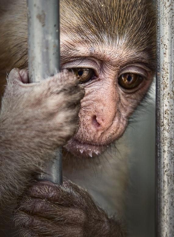 Жестокость к животным в вузах и альтернативы жестокости.