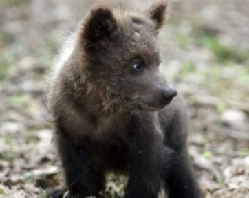 Полицейские разыскали живодера, избившего железной трубой медвежонка