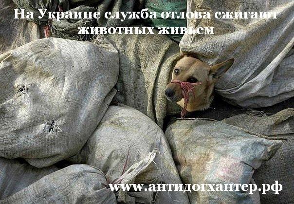 На Украине службы отлова сжигают животных живьем