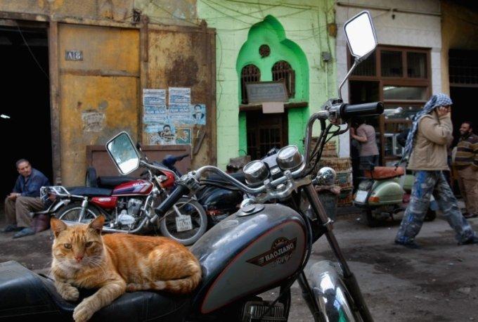 закон должен обязать муниципалитеты расставлять на улицах поилки для кошек и собак