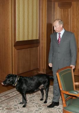 Защитники животных просят запретить въезд в Европу и США чиновникам, решившим обложить налогом владельцев собак
