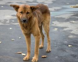 Кто ответит за смерть собак на Мехзаводе?