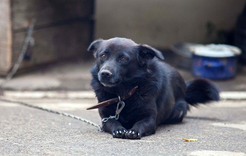 Догхантеров, убивающих собак, вряд ли кто-нибудь накажет. Ведь если гуманные методы сокращения численности бродячих животных уже придуманы...