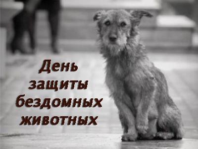 День защиты бездомных животных