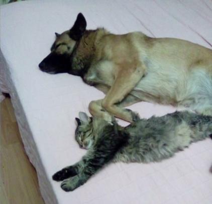 Казанские живодеры-догхантеры, вновь ведут отстрел домашних животных