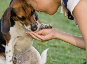 Волгоградцы будут кормить бездомных животных