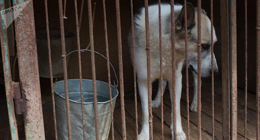Надоела безнаказанность в Казахстане требуют защитить животных