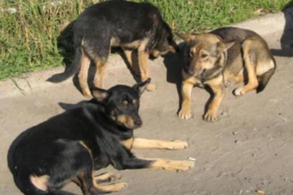 Под Волгоградом откроется заповедник для безнадзорных и диких животных