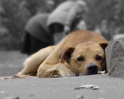 И вновь о догхантерах. Почему трудно наказать тех, кто мучает и убивает животных.
