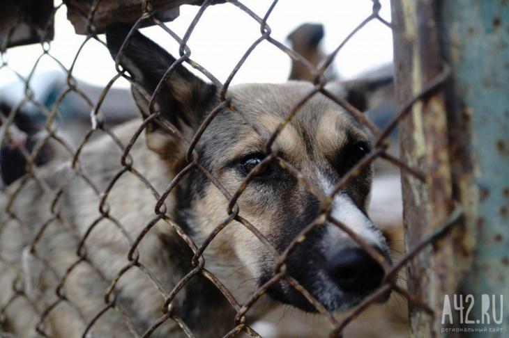 пикет в поддержку законопроекта «Об ответственном обращении с животными».