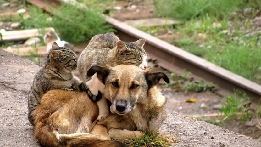 наши погибающие собаки и кошки не могут ответить живодёрам так, как ответила им медведица…