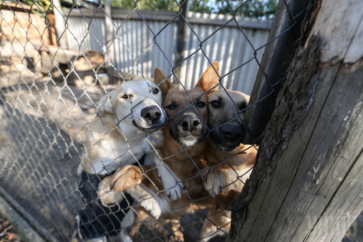 приют для собак «Лора»
