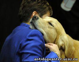 Любовь животных и человека