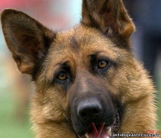 За жестокое издевательство над собаками живодеры поплатятся тюрьмой