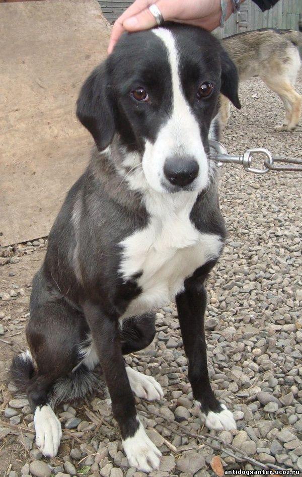 Иркутская собака 3 месяца ждала хозяев на плотине ГЭС (фото)