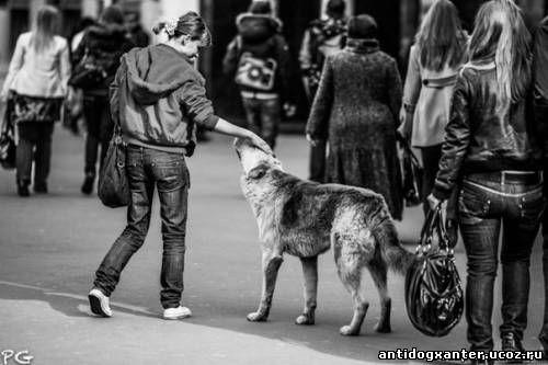 Как помочь бездомному животному?