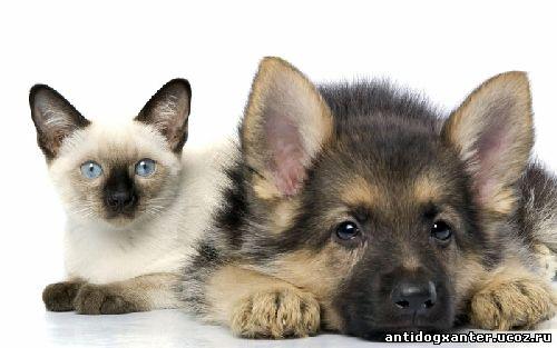 Щенок и котенок, приют для животных