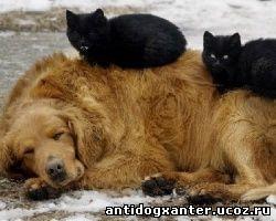 брошенная собака и две кошки