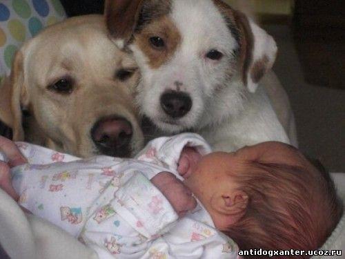 Специалисты из США выяснили, что присутствие в семье четвероногого друга, а именно собаки, снижает риск аллергии и астмы у детей.