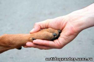 дружба животных и людей