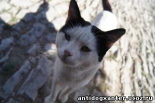Самарские защитники животных подписали петицию против отлова кошек