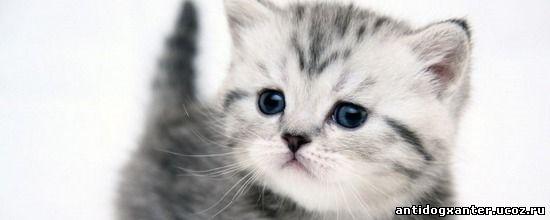Живодера, убившего котенка на глазах 9-летней девочки, будут судить