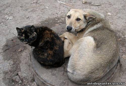 Кто лучше поймет бездомного, чем бездомный