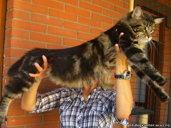 Дорогой кот