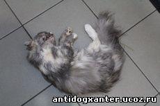 Речь идет о садисте, который убивает кошек в Череповце, предварительно отрезая им язык