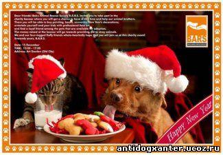 состоится благотворительная ярмарка, организованная обществом защиты бездомных животных B.A.R.S. Подробности: http://1news.az/society/20131214053558703.html Любое использование материалов допускается только при наличии гиперссылки на 1news.az