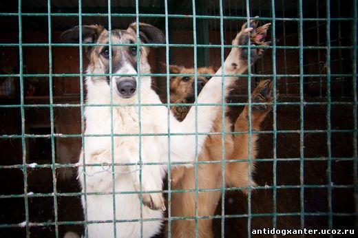 Передержка– это место, где животные за деньги живут в хороших условиях и Невыносимая жестокость