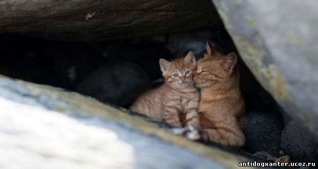 Рыжая кошка и котенок