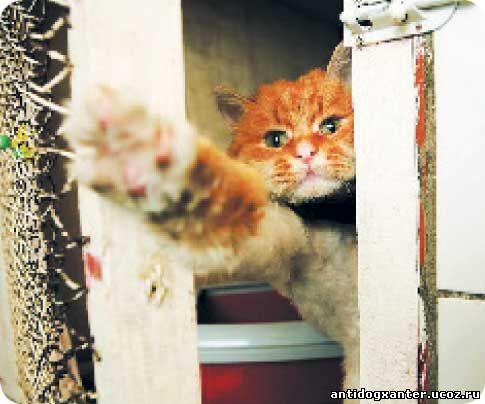 рыжи котик