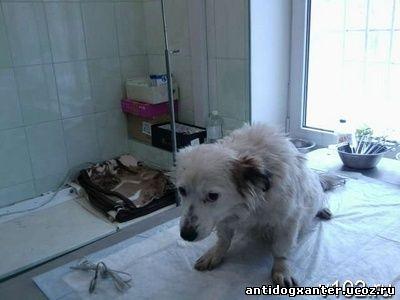 В Волгограде приют для животных «Покровитель» снова кричит «SOS»