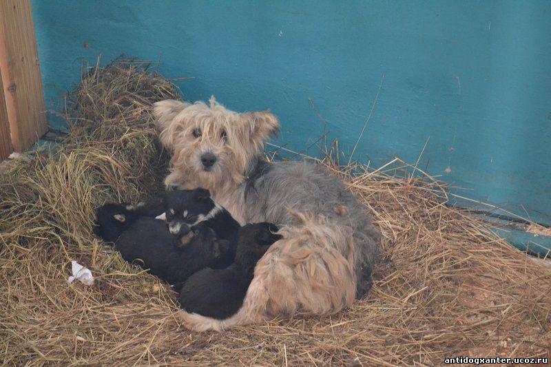 Собака на сене с щенками