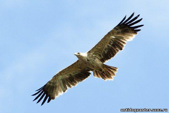 Солнечный орел погиб в передвижном зоопарке
