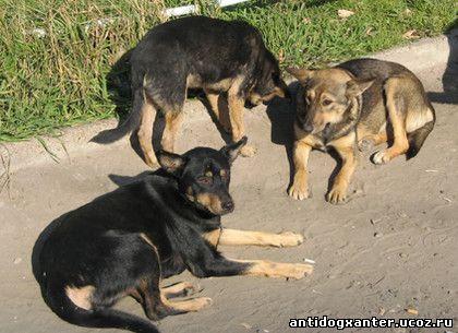Собаки в харькове