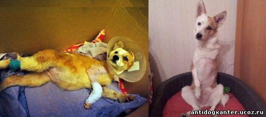 Как в Воронеже и Москве спасли и приютили замученного живодерами щенка