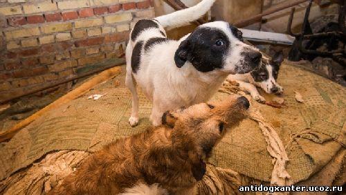 Ухтинский приют, собаки брошены людьми и властями