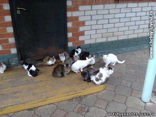 В частном доме у челнинки Ильмиры Мингазовой проживает 60 кошек