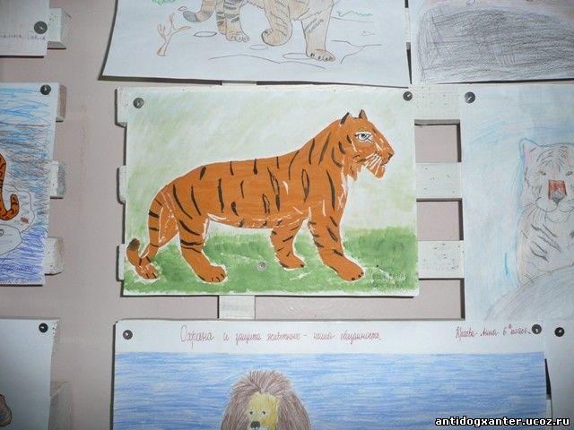 В Мончегорске проходит акция «Неделя в защиту животных»