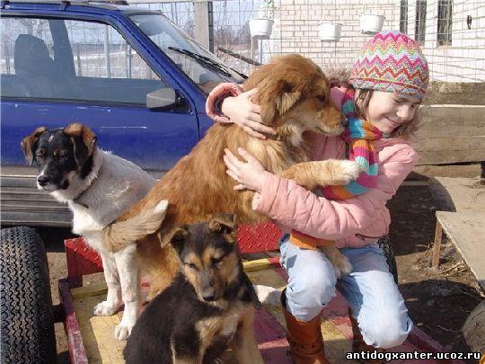 Животным нужен приют