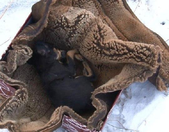 В частном приюте для животных в Чите обнаружено более 20 трупов освежеванных собак