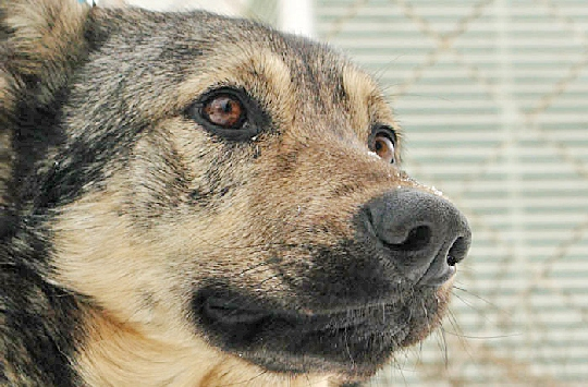 Собака спасла женщину и ребенка от убийства в Вологде
