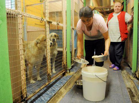 В приюте для бездомных собак и кошек