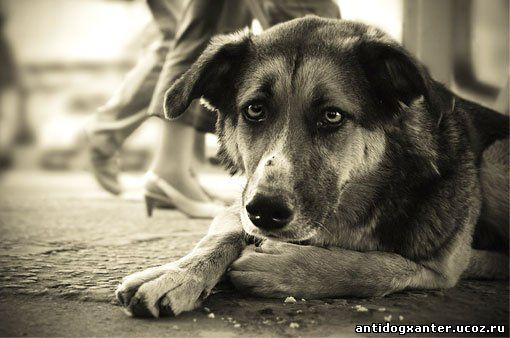 Отлавливать бесхозных собак в Барнауле будет новый подрядчик