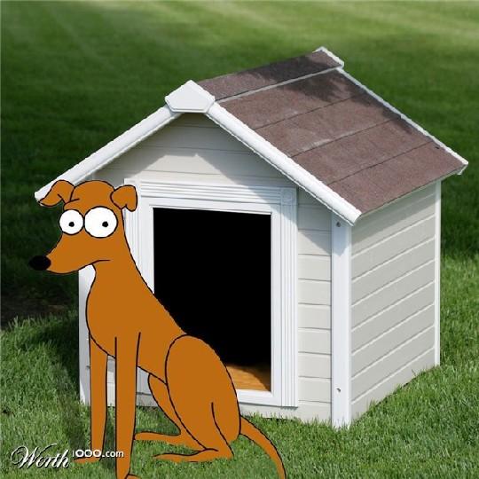 В Приморье начнут реабилитировать бездомных собак